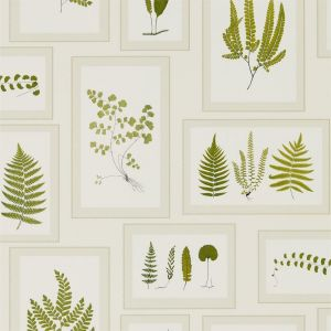 Sanderson Wallpaper Woodland Walk Fern Gallery 215712 Ivory Green